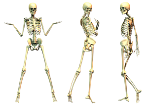 skeleton-png-file