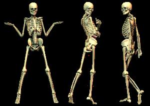 skeleton-png-file